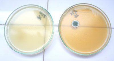 бактерии в косметике